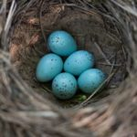 Decorative Image of a bird's nest with blue eggs inside.