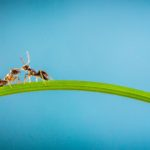 Decorative image with two ants on a grass leaf.